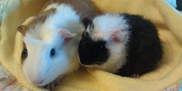 Halle and Tribble