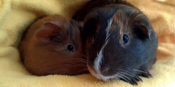Hershey and Snickers