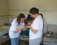 Two volunteers clip a guinea pig's nails while shelter scouting after taking his photo for our website. This increases their chances for adoption.